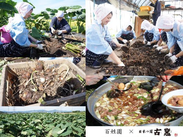里芋掘り_20130913