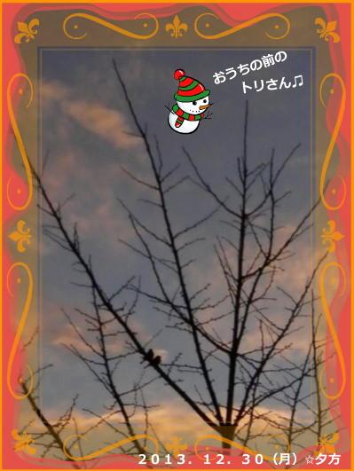 花ブ20131230-2