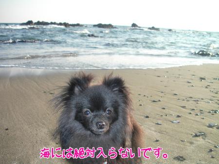 sagakaigan-09.jpg