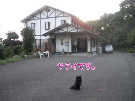 sarai-01.jpg