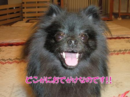wanbana-01.jpg