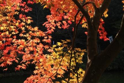 嵐山 024