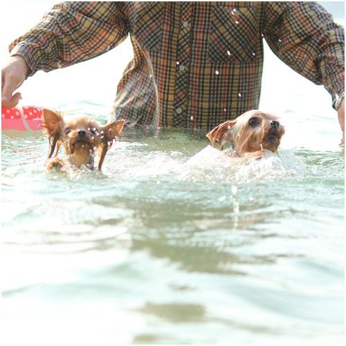 クルココ泳ぐ