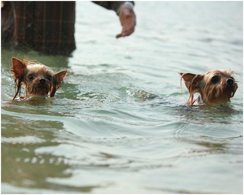 クルココ泳ぐ2