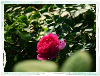 s-photo 6