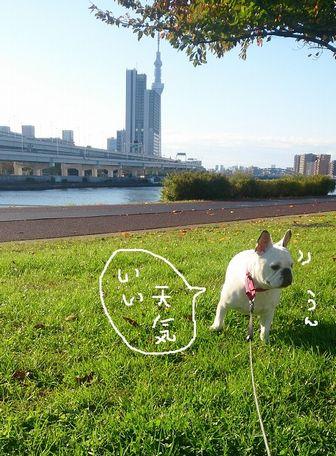 11・07 いい天気