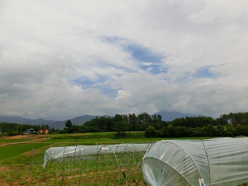田植えCIMG1646