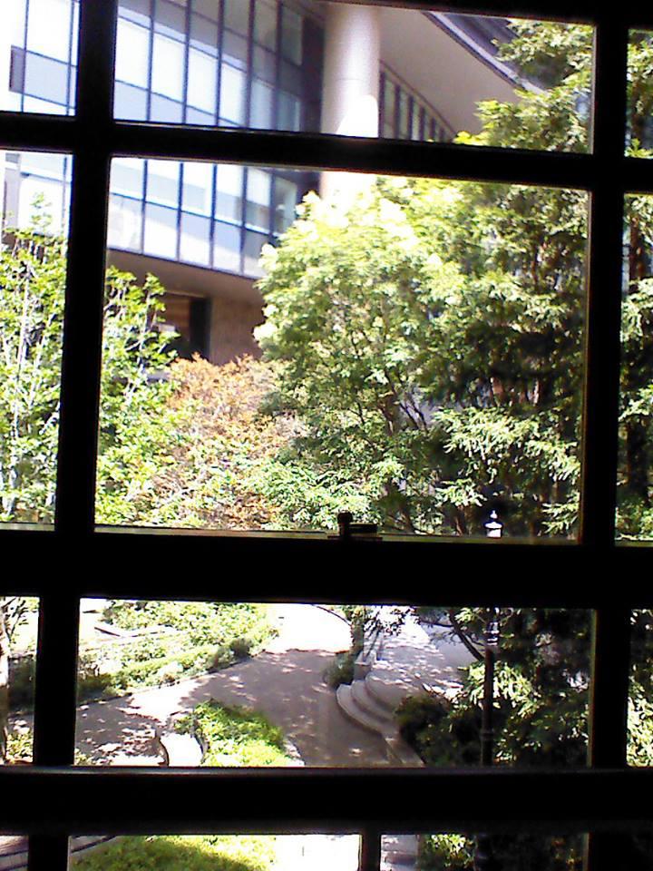 窓から見た庭