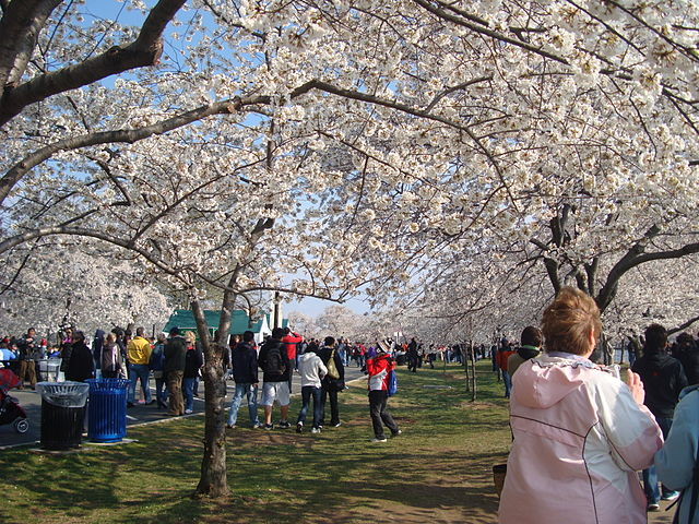 640px-Cherry_Blossom_Festival_Washington_DC.jpg