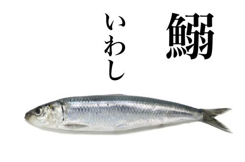 iwashi.jpg