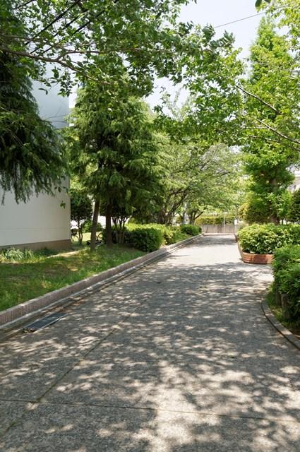 公団美室団地の小道