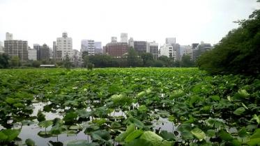 上野不忍池1-11