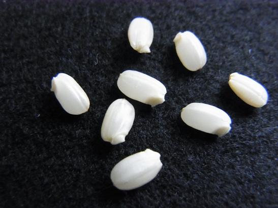 0611発芽玄米