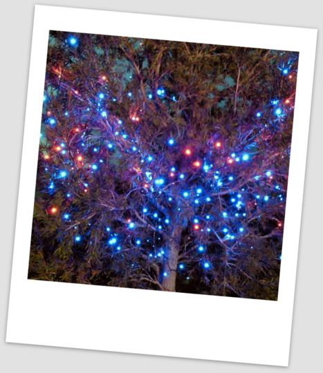 ラ・ミア・ヴィータのクリスマス