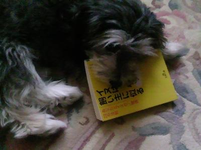 読書するくうたん。