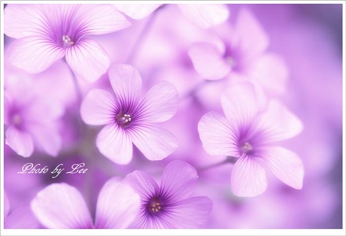 YSD_6462-Edit2-700.jpg