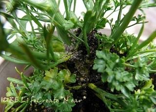茎の根元に土と白い粒々が!