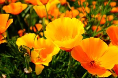 近所の畑が花でいっぱいでした。