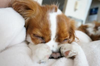 顔隠して寝るパティ