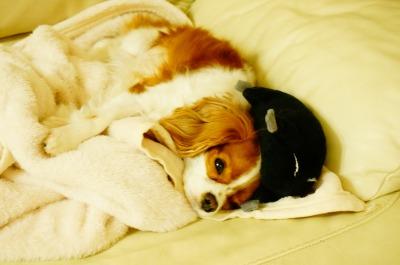 頭の上にネズミちゃんを乗せて寝てます