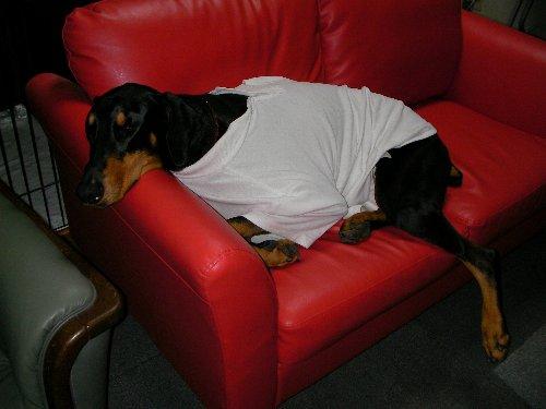 20131229・0:31自力でソファーに倒れ込む②