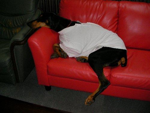 20131229・0:31自力でソファーに倒れ込む①