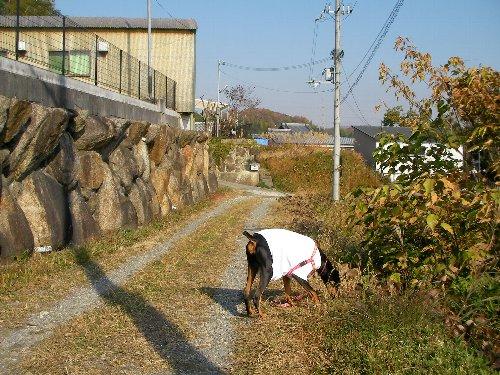 20131204・10:38朝散④