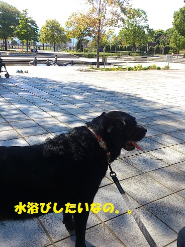 DSC_0850-1.jpg