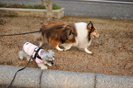 初お散歩2014