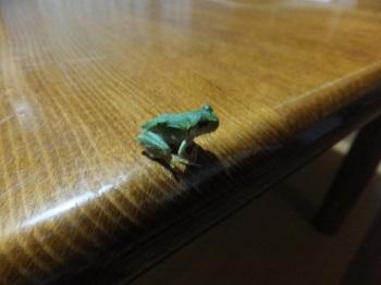 テーブルの上のかえるちゃん