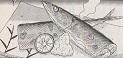 サンマの肝しょうゆ焼き図