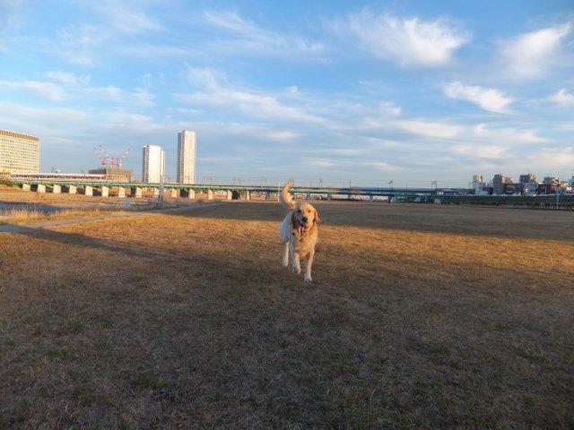 多摩川河川敷20131230 041