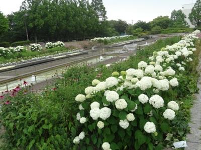 荒子川公園1