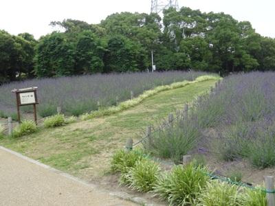 荒子川公園3