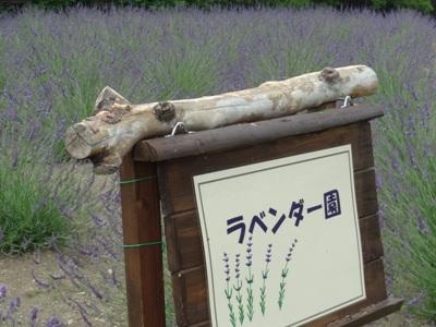 荒子川公園4