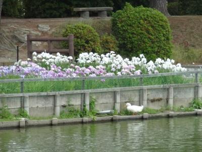 九華公園9