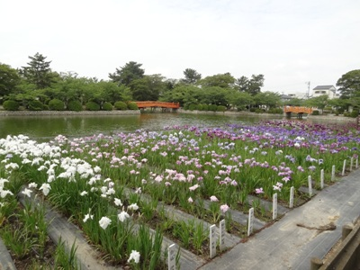 九華公園2