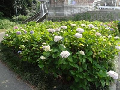 上野台公園1