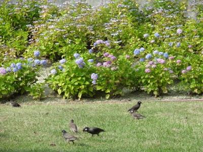 上野台公園2