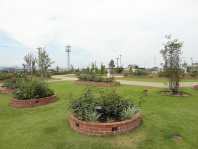 神戸町ばら公園1