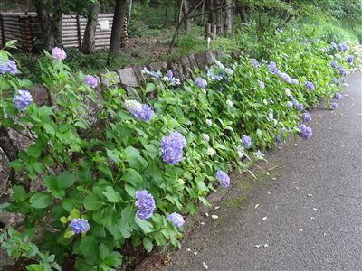 春日井市都市緑化植物園(グリーンピア春日井)4