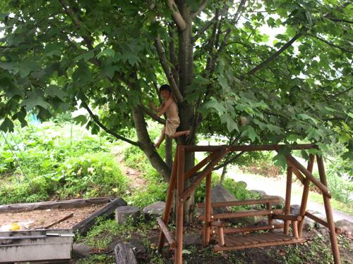 20130725木に登るKAN太
