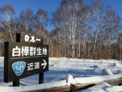 日本一の白樺群生地出口