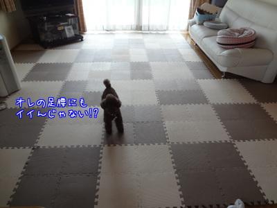 nxWEfGBJkx61lMp1376130211_1376130333.jpg