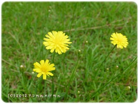 hitachi9_20130718144512.jpg