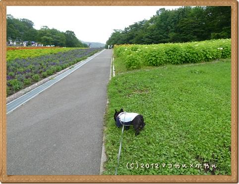 lavenderpark3.jpg