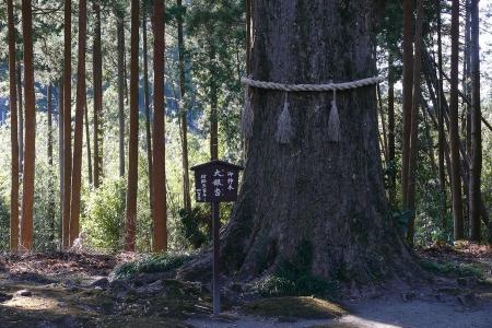 樹齢推測300年の大銀杏