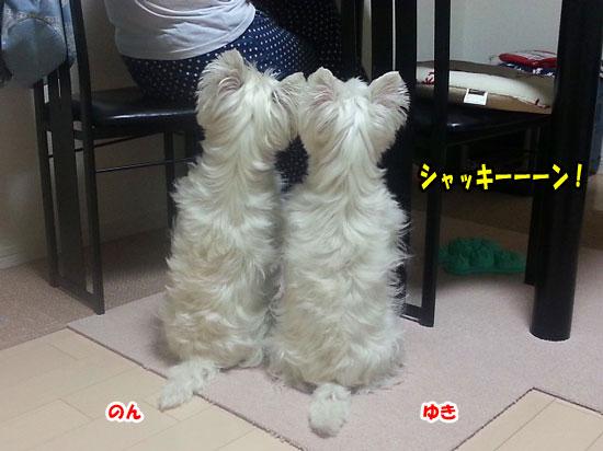 20130619_214523-550.jpg