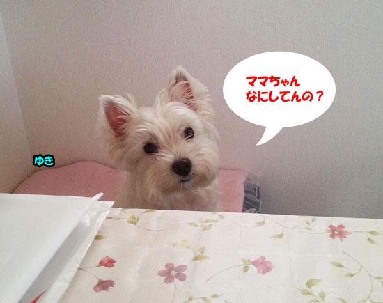 20130911_154327-1.jpg