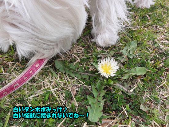 DSC03044_20130329230430.jpg